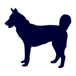 Samolepka na auto - pes v autě - Husky