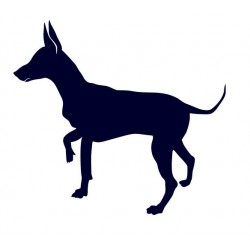 Samolepka na auto - pes v autě - Krysařík