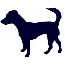 Jack Russell teriér- Samolepka na auto - pes v autě
