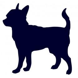 Čivava- Samolepka na auto - pes v autě