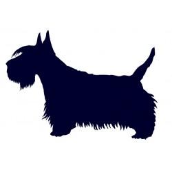 Skotský teriér- Samolepka na auto- pes v autě