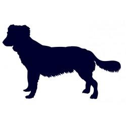 Kanadský retrívr- Samolepka na auto - pes v autě