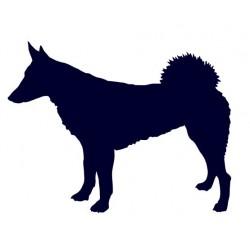 Západosibiřská lajka- Samolepka na auto- pes v autě