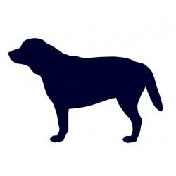 Labrador- Samolepka na auto - pes v autě