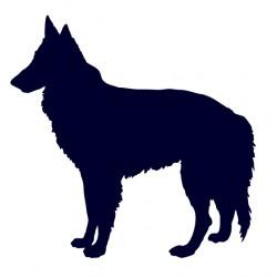 Groenendael- Samolepka na auto - pes v autě
