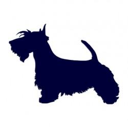 Samolepka na auto-pes v autě- skotský teriér