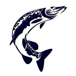 Samolepka na auto - štika - rybaření